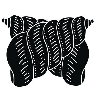 貝紋 SHELL